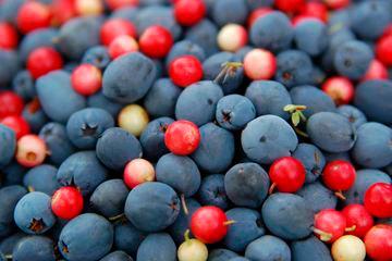Produkty s antioksidantami pri artrite