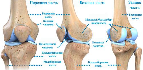 Anatomiya-kolena
